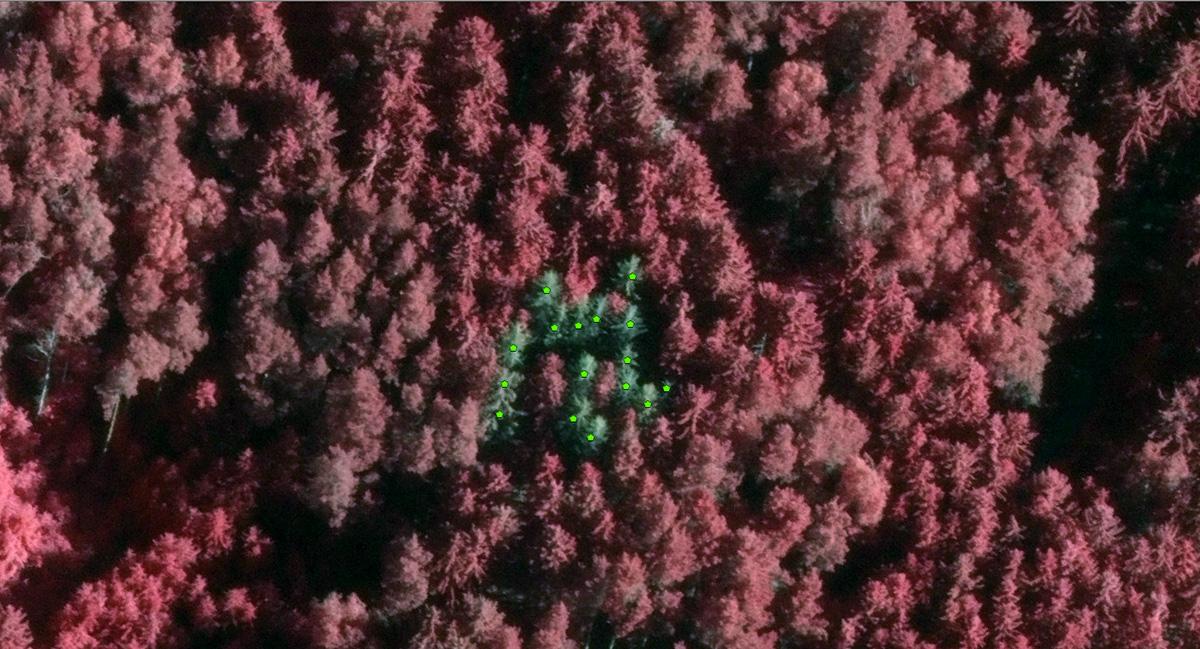Analýza suchých stromů